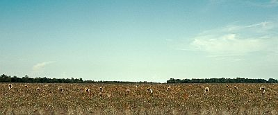 A shot from 12 Years a Slave