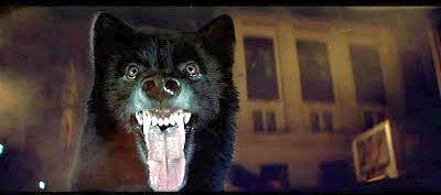 8-7-14-wolfen-wolf
