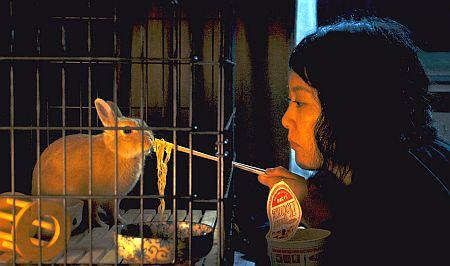 12-7-15-kumiko-rabbit