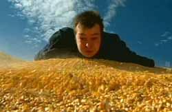 Hills of corn
